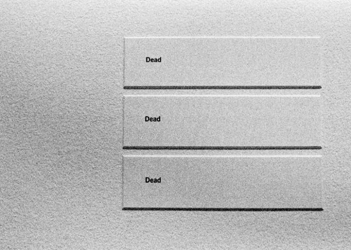 deaddeadead